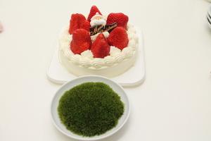 ケーキと苔.JPG